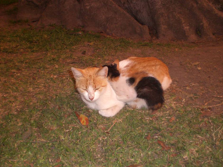 Kitties in Parque Kennedy