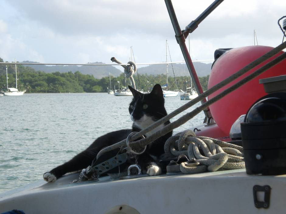 Michu - cat on board!