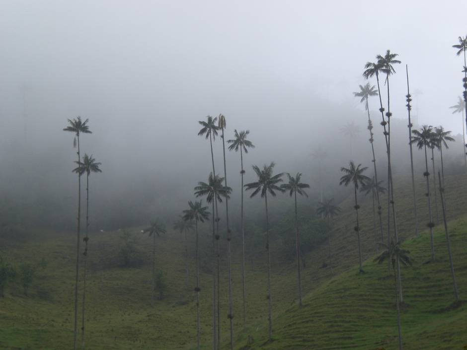 Valle de Cocora is one of the most spectacular places to visit in Colombia