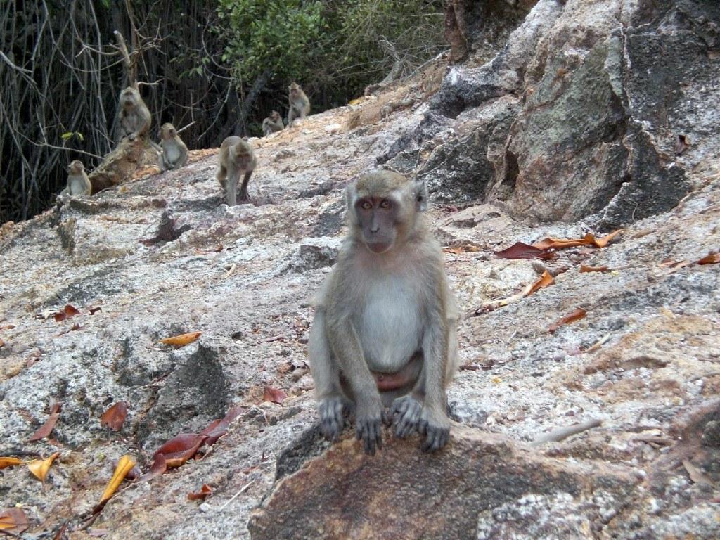 it's no monkey business