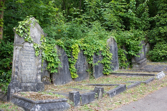 In search for something unique in HIghgate Cemetery - photo courtesy of Richard Turner