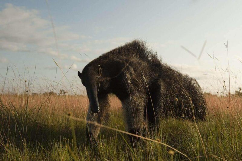 wildlife in Guyana