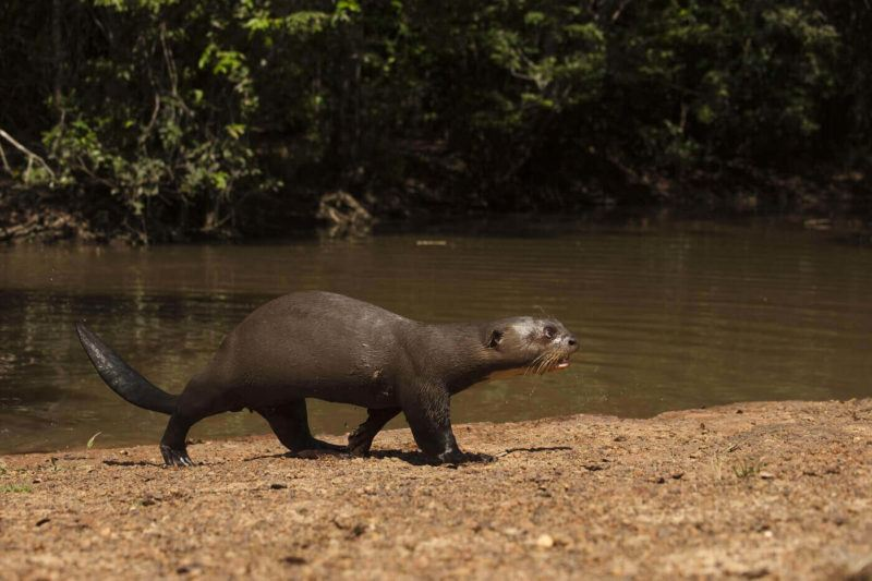 Guyana wildlife